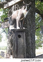 Cat on bird house