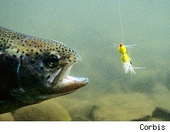 fish pursuing a lure