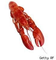 Lobster recall: Listeria contamination suspected