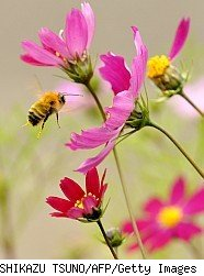 Bee amid flowers