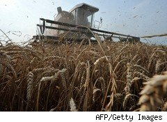 Wheat Prices Hit Two-Year High After UN Warns of China Drought