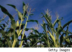 Shrinking Corn Crops, Rising Ethanol Production Make for Volatile Prices