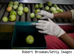 Food safety  inspector checks apples