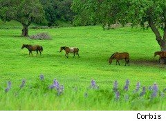 horses in a pasture - horse rescue charity accused