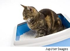 cat litter green flushable