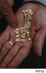 a married man holds seeds - IRA tuneup
