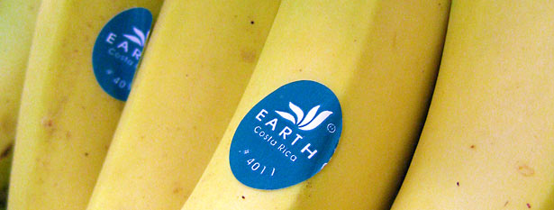Earth Bananas