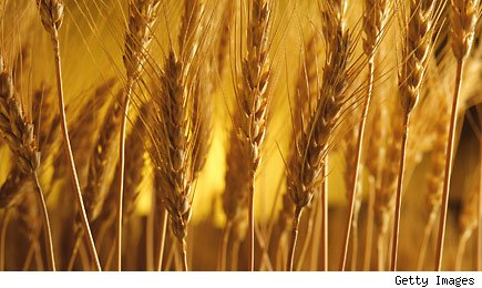 Wheat and speculation