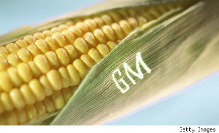Genetically Modified Corn Proposition 37 GMO