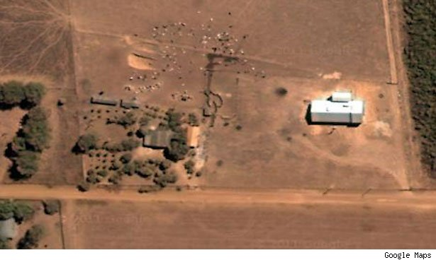 The satellite views of Mato Grosso are spectacular. Here's some grazing livestock near a town called Sinop.