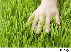 Grass healthy care