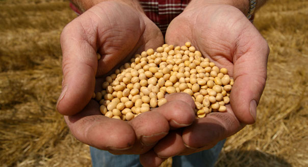 monsanto earnings profit forecast corn soybean