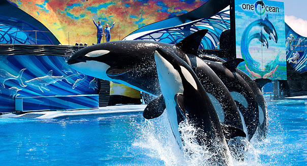 Jason Collier, AP  SeaWorld