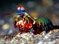 DNP Inhabitat's Week in Green solar supertrees, peepowered plasma and a bugeyed mantis shrimp with a serious right hook