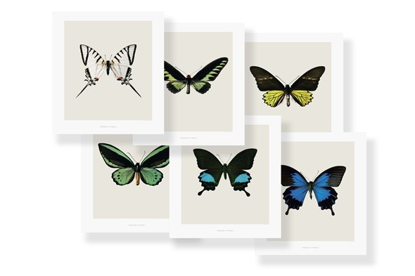 boutique of the week; rockett st george; butterfly prints