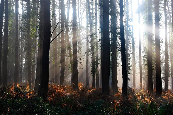 Light shining through forest trees