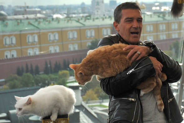 Antonio Banderas, Salma Hayek and a whole load of cats