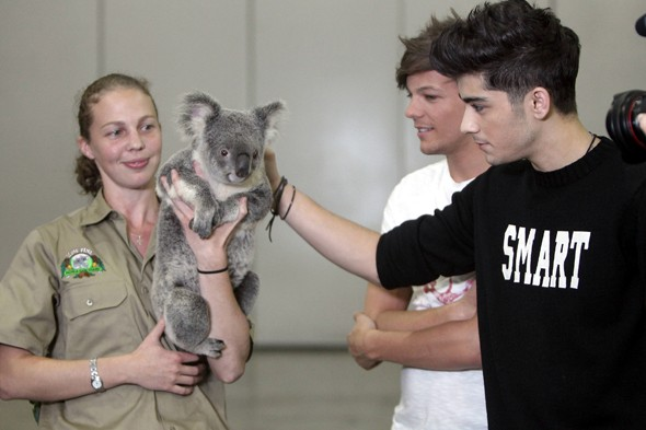 The One Direction Inspection: Why is Niall missing from the Koala holding line up?