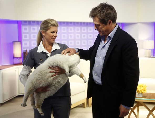The best picture of Hugh Grant petting a ginormous cat you will see today