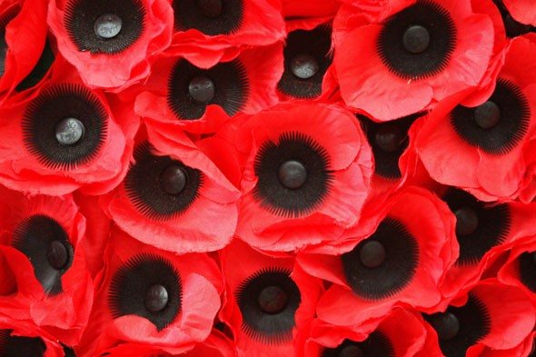 Remembrance Day poppies: Schoolgirl celebrated 11th birthday on 11/11/11