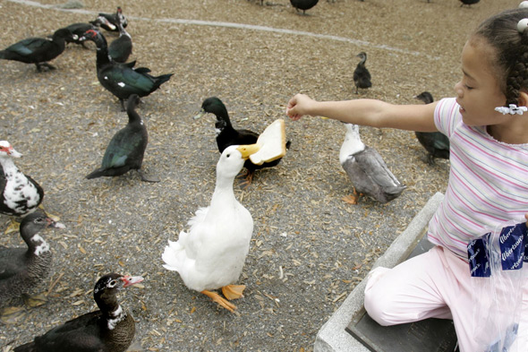 Feeding the ducks? That'll be a £2,500 fine