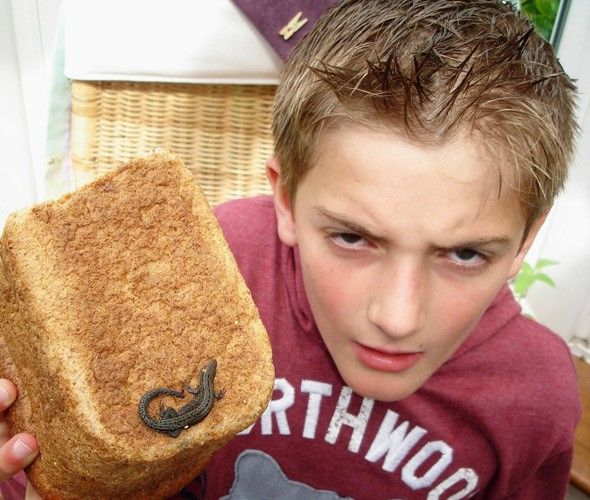 Every lizard helps! Boy finds reptile in Tesco loaf