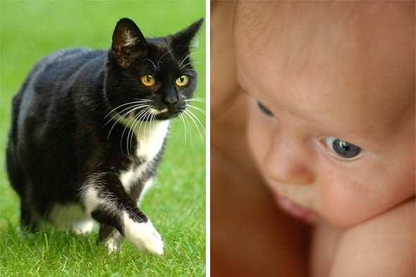 Tired of friends' baby photos? New technology can turn them into CATS