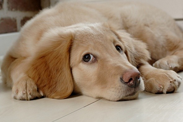 One in four Brits have a dog instead of a baby