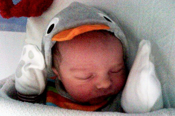 Week-old baby dies after being bitten by family Jack Russell