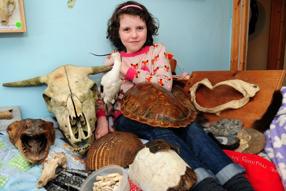 It's the Daisy-saurus! Little fossil-finder has dinosaur named after her