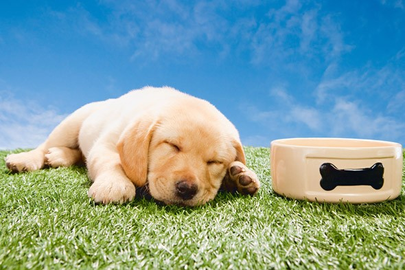 Stressed-out students to get puppy love before exams