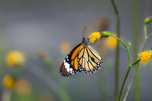 7 tips for a butterfly friendly garden **IT'S SAVE OUR BUTTERFLIES WEEK**