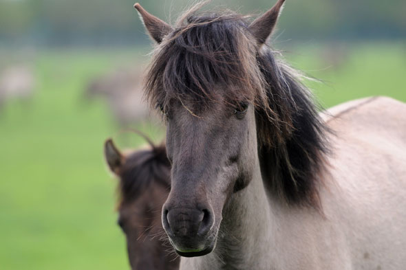 Seven-year-old dies after being thrown from pony